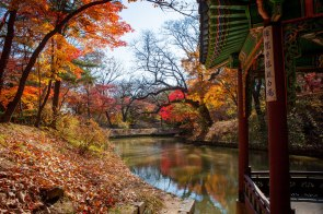 Changdeokgung-Palace-Seoul-Autumn-Leaves-Danpoong-Secret-Garden